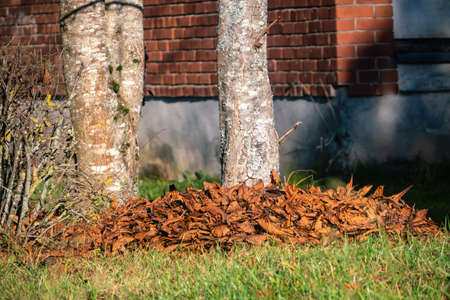 Dry dried tree leaves covered on the ground around a tree trunk. Close view.