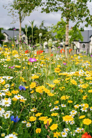 Various flowers blooming in the meadow in summer