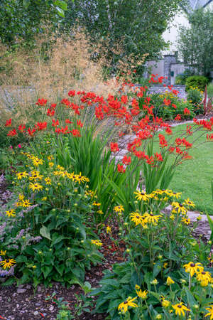 Montbretia,Tufted hair grass and Black-eyed Susan flowers in summer