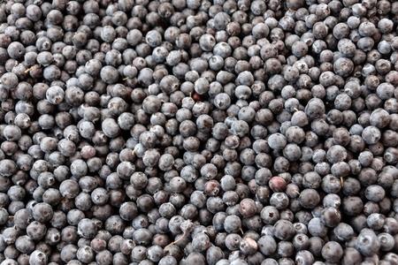 anti season: Abundant blueberries