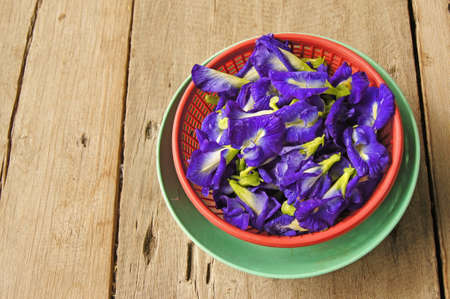 pea shrub:  butterfly pea flowers for medicines Stock Photo