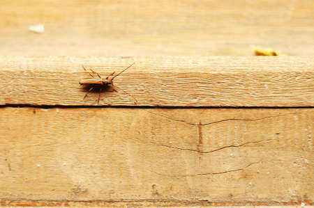 Beetle Crawling On The Wood Floor Stock Photo Picture And Royalty