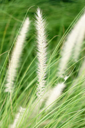 Grass closeup background photo