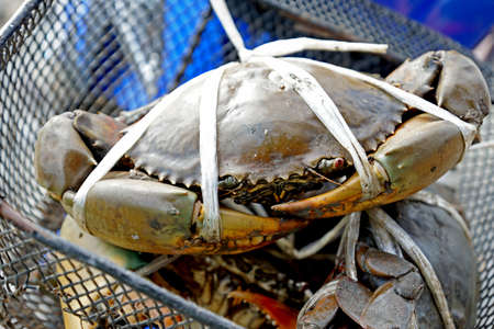 Serrated mud crabs in basket for sale  photo
