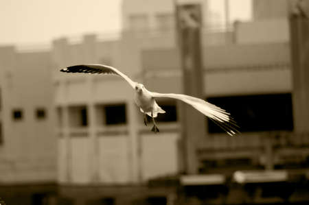 The seagull at Bang Pu Seaside, Samut Prakan,Thailand photo