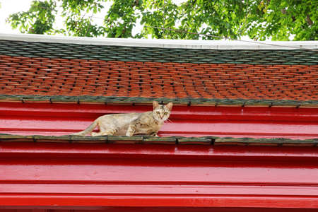 A vagabond cat live in the Buddhist temple photo