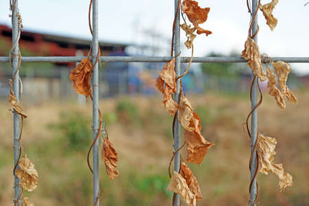 Metallic fence with dry leaves for background texture photo