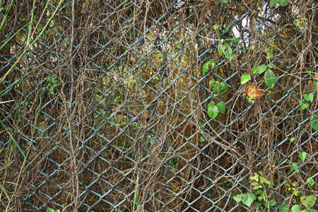 Metal wire fence covered with vines