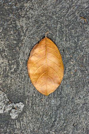 Dry leaf on cement floor Stock Photo