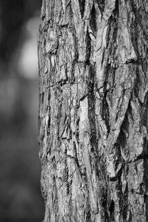 Bark - Black and white photo