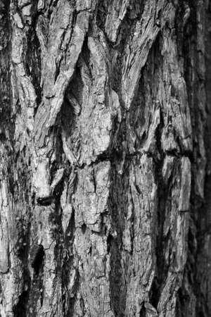 Bark texture - Black and white photo