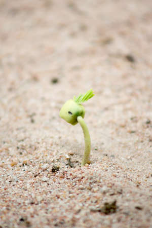 Seedlings sprouting from the sand photo