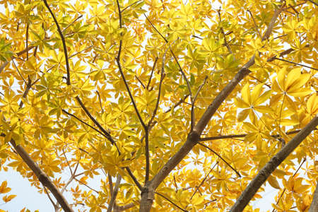 Autumn colored leaves on tree for nature