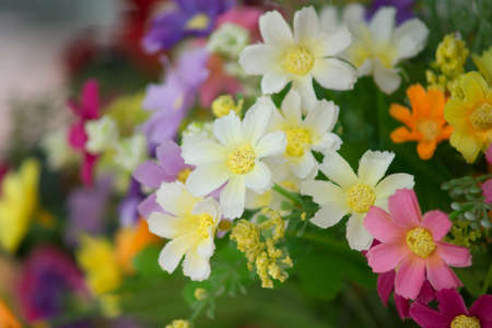 Bunch of colorful artificial flowers