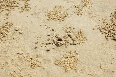 beach crab hole Stock Photo