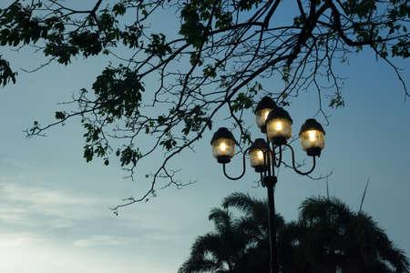 Street lamp in park - illumination night scene