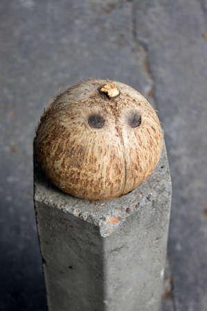 Tree eyes Coconut shell