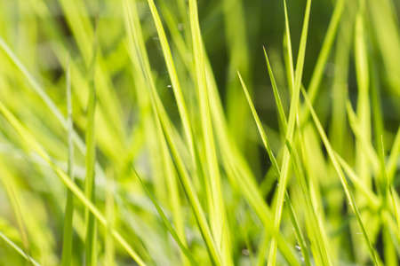 background of green grass in nature