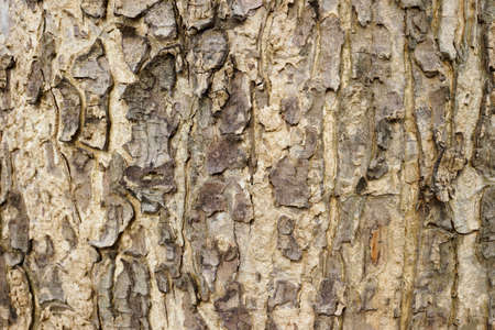 Tree trunk texture photo