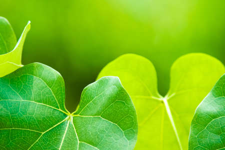Green leaves for nature background Stock Photo