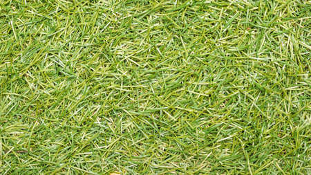 turf: artificial turf background
