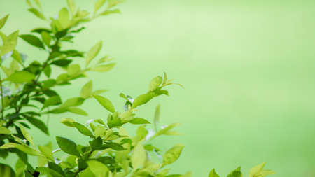 Soft focused of Green leaves for background