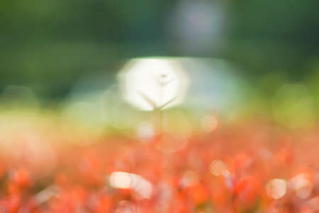 Blurry of Red and Green leaves with bokeh as abstract background Stock Photo