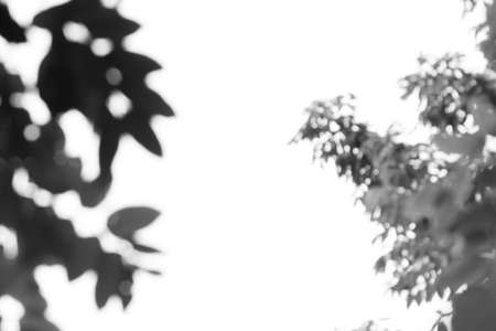 nearness: abstract Shadows of leaves -  isolated on white Stock Photo