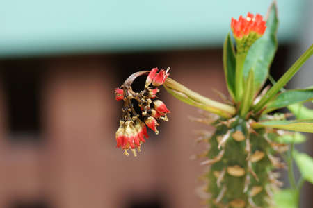 atrophy: Dying or wilting Cactus flower