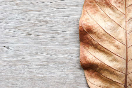 dry leaf: Part of Dry leaf on old wood background