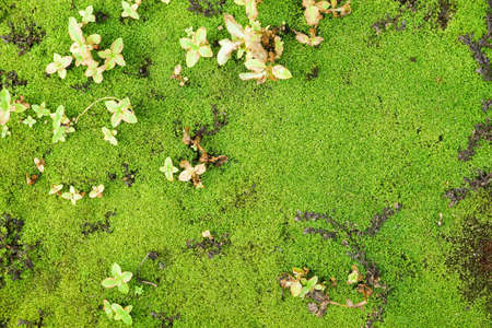Green moss texture background - Background and frame Stock Photo