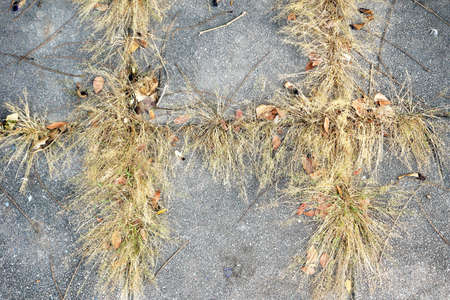 The dry grass growing through the gap of the cement Blocks for abstract background