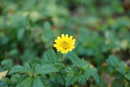 A little yellow flower as background with copy space