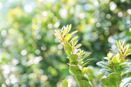 Natural leaves on blurry green nature background with bokeh