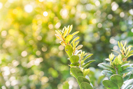 Natural leaves on blurry green nature background with bokeh -  Shining Warm light Stock fotó