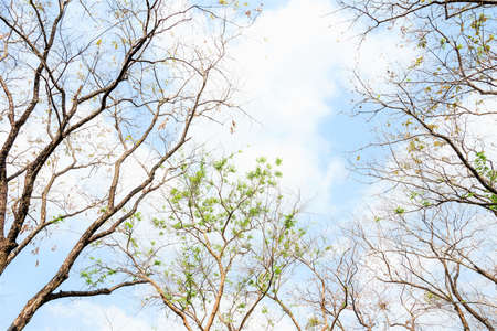 Natural forest with blue sky - Nature background