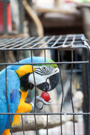 Macaw bird in cage