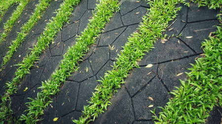 garden floor as abstract background