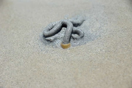 Sand worm Dung  ( Polychaete )