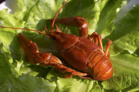 cooked crawfish on the lettuce photo