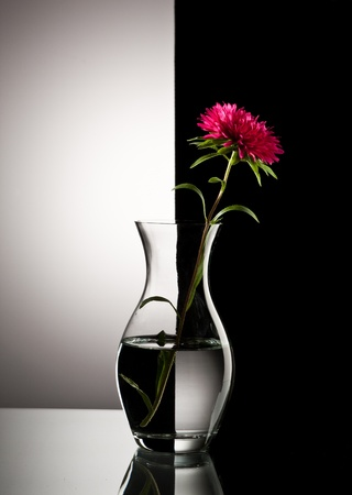 red flower in vase over black and white background