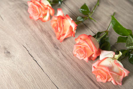 pink roses on the woden table background
