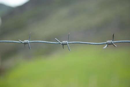barbed wire in green landscape background Foto de archivo
