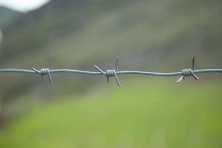 barbed wire in green landscape background