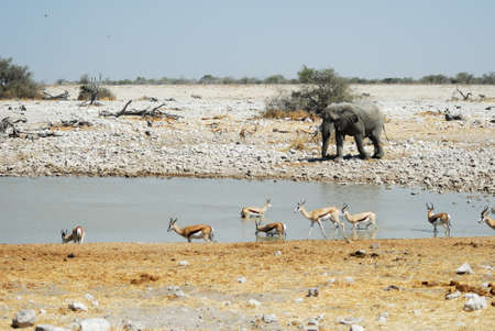 Wildlife animals in the Etosha .