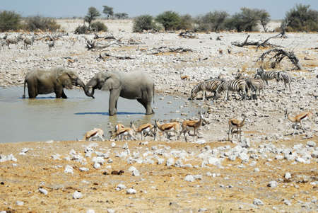 Wildlife animals in the Etosha.