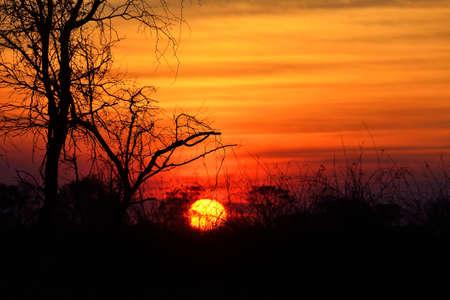 Sunset in the Okavango delta at sunset, Botswana