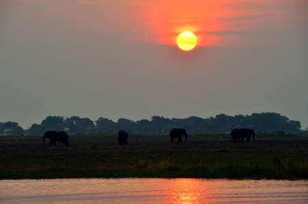 Sunset in the Chobe National Park, Botswana Stock Photo