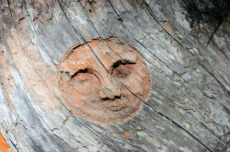 Smiling face in the wood, Valle dAosta, Italy Stock Photo