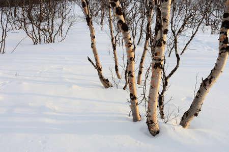 Wintry landscape in Swedish Lapland Stock Photo